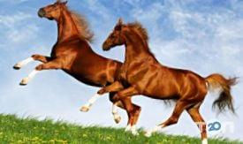 Винниччина, конно-спортивный клуб - фото 1