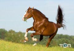 Винниччина, конно-спортивный клуб - фото 2