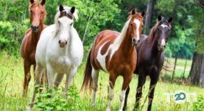 Винниччина, конно-спортивный клуб - фото 3